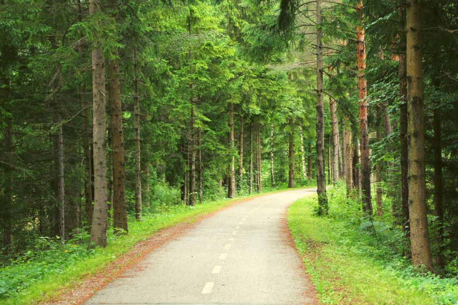 Flat road through the forest for cycling on